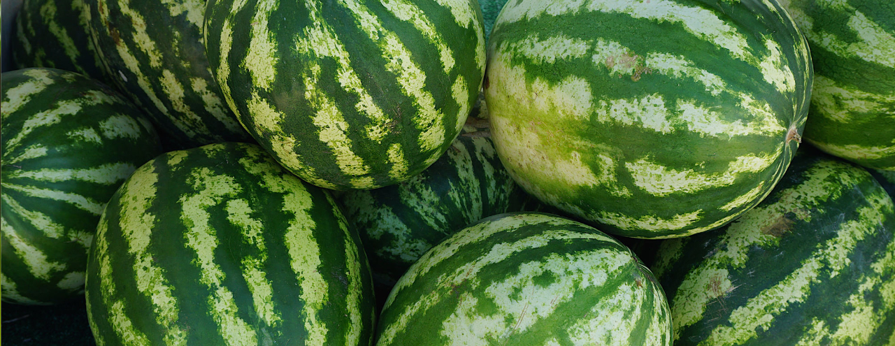 Summer Produce Guide Watermelon